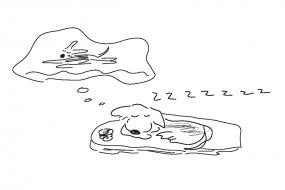 37_dog_dreamingofrunning