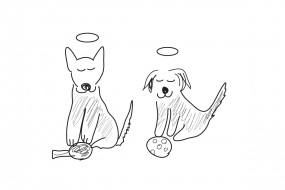 62_dog_how dogs envision-31