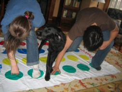 Bingley as a puppy wiggles his way into a twister game.