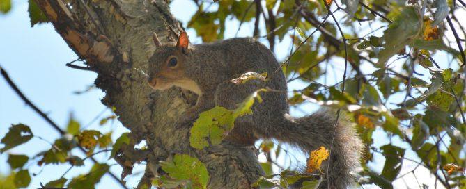 squirrel dog tree